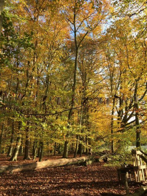 Waldkindergarten-Die-Wurzelkinder